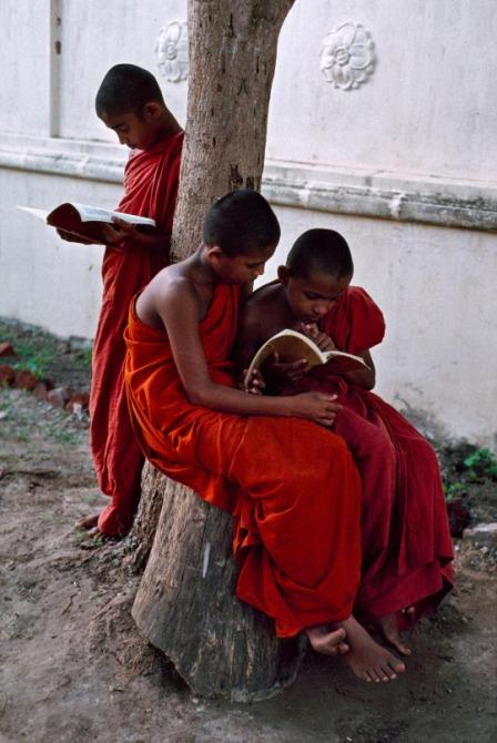 Three novice monks study their books by a tree, Sri Lanka, 08/1995